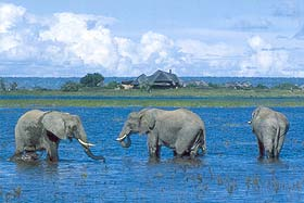 Chobe Savanna Lodge Namibia