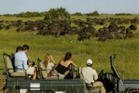 Duba Plains Camp Wilderness Safaris Botswana