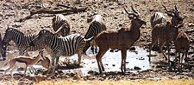 The Etosha National Park Namibia