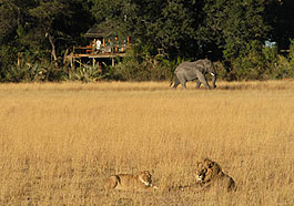 Kwetsani Camp, Wilderness Safaris, Botswana