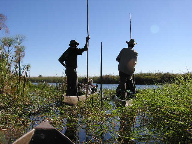Okavango Delta: waiting for the hippos